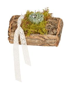 Moss and succulents on-top an OASIS Natural Bark Log. Forest Wedding, Rustic Wedding, Woodland Forest, Weathered Wood, Holiday Traditions, Wedding Decorations, Wedding Ideas, Oasis, Floral Arrangements