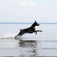 #best #Doberman #dog