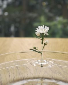 Floating Vase / RIPPLE | Fill your favourite container with water and float the vase. According to the movement of the air, the plants change their position and appearance in the container.