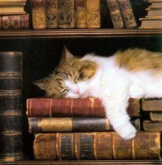 Gato echándose la siesta entre libros