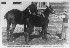 "[Prize winners at Sherburne County fair, Minnesota.  Horses ""Keota Fair Maid"" and her filly]"