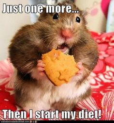 haha and the diet never gets started! just one more...just one more lol