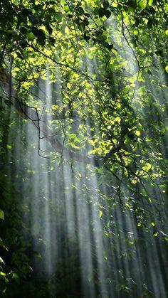 Nature Hills Nursery | America's Largest Online Plant Nursery
