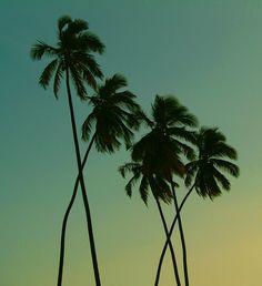 Dancing coconuts
