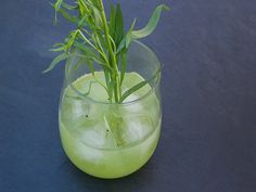 Sweet kiwi is accented with the slightly licoricey flavor of tarragon in this easy gin cocktail.