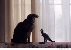 cat takes on tyrranosaurus rex