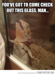 This glass, man… beardie love... Soo adorable. It's because the glass is probably cold and its supposably really hot in there.