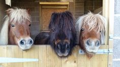Three Cheeky Ponies at Farmer Palmer's Farm Park | Poole | Dorset UK Great Family Days Out with Kids!
