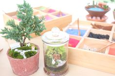 Garden in a glass jar