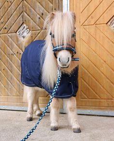 Cute Baby Horses, Baby Farm Animals, Funny Horses, Cute Little Animals, Cute Funny Animals, Cute Horse Pictures, Baby Animals Pictures, Beautiful Horse Pictures, Most Beautiful Horses