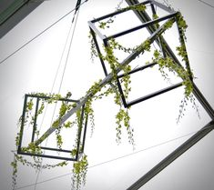 Did you say sculptural design for your upcoming special event? We LOVE any reason to install flowers and design within these welded cubes.