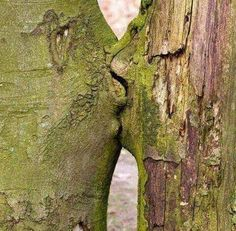 Loving Trees no matter how much we try to show the love that fills the world nature always seems to outshine our creativity , miyo jergen , 2016 the kissing trees , land art that arose naturally Beautiful World, Beautiful Places, Beautiful Nature Scenes, Weird Trees, Tree Faces, In Natura, Unique Trees, Nature Tree, Jolie Photo