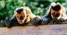 Naughty monkeys what would you caption this? Primates, Wildlife Photography, Monkeys, Captions, Shots, Africa, Animals, Instagram, Rompers
