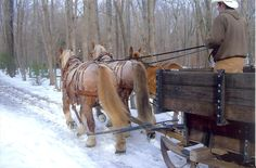 Try our sleigh rides as a wonderful Christmas or New Year's treat, or for any occasion as long as our wonderful wintertime lasts. Sleigh Rides, Horse Drawn, Horse Farms, Winter Time, Bridges, Winter Wonderland, Paths, Country Roads, Magic