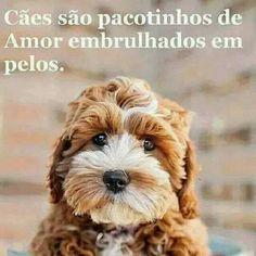 Amor de cão.!... Pets 3, Pet Dogs, Dog Cat, Love Pet, I Love Dogs, Animals And Pets, Cute Animals, Lhasa Apso, Pet Shop