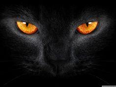 orange black animal | Black Cat with Orange Eyes