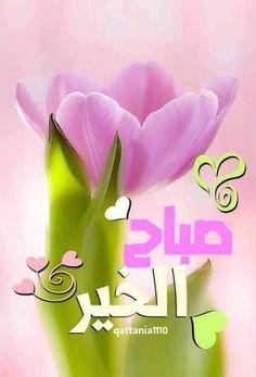 Good Morning Arabic, Good Morning Good Night, Morning Wish, Good Night Messages, Morning Messages, Morning Greeting, Good Morning Beautiful Images, Good Morning Photos, Morning Texts