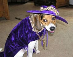 Halloween Photo Contest: Baxter the Beagle