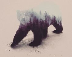 Nature in the brown bear. Artist Shows Us Animals With Their Environments Inside Them, So Daoist http://www.visiontimes.com/2015/05/07/artist-shows-us-animals-with-their-environments-inside-them-so-daoist.html?photo=2