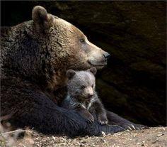 Momma & Baby Bear
