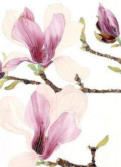 watercolour and pencil on paper Kids Watercolor, Watercolor And Ink, Watercolor Flowers, Watercolor Paintings, Magnolia Paint, Magnolia Flower, Cc Drawing, Japanese Magnolia, Pencil Drawings Of Flowers