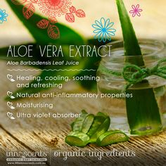 Organic Aloe Vera is ideal for babies with sensitive skin conditions. It is a key ingredient in our Intensive Soothing Cream, Moisture Rich Body Lotion, SPF 30 Sun Lotion, Milky Whites Tooth Paste and our Hair Fudge. Organic Aloe Vera, Organic Baby, Organic Skin Care, Sun Lotion, Body Lotion, Australian Organic, Sensitive Skin, Health And Wellness, Tooth Paste