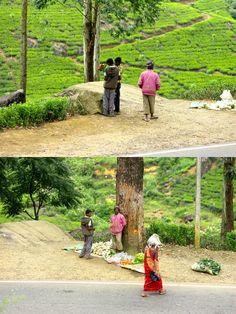 Roadside shopping, Nuwara Eliya, Sri Lanka #SriLanka #NuwaraEliya #TeaCountry #StreetMarket Sri Lanka, Country, Holiday, Shopping, Vacations, Rural Area, Holidays, Country Music, Vacation