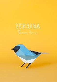 Tersina / Swallow-tanager Tersina viridis
