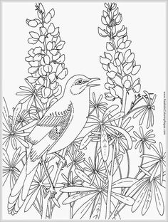 realistic coloring pages google search robin birdcoloring