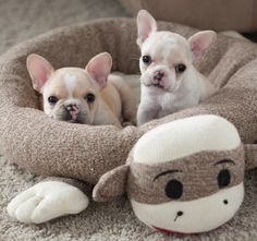 Little monkeys!                                                                A Sock Monkey bed for your pets!
