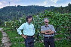 Graziano Fontana, real vigneron in Faedo, Trentino