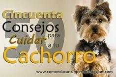 Guía Completa para cuidar a tu perro      Los perros son seres muy sensibles e inteligentes, son capaces de aprender muchas cosas y so...