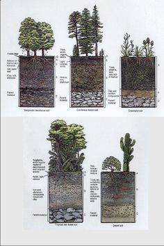 profile of soil - how very interesting...