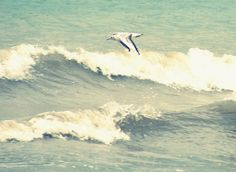 Gull over the waves