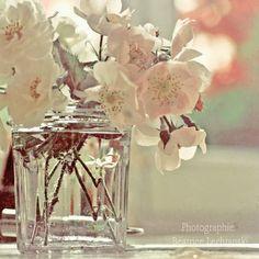 Fotografía de flor. Rosas... Impresión fine por BeatriceLechtanski, $35.00