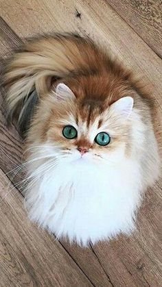 Exceptional cute cats info are readily available on our web pages. Cute Baby Cats, Cute Cats And Kittens, Cute Little Animals, Cute Funny Animals, Kittens Cutest, Funny Cats, Pretty Cats, Beautiful Cats, Animals Beautiful