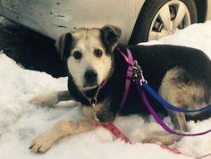 A New York, Charlie, un chien qui n'a jamais accepté de suivre d'humain, a enfin trouvé une famille qui s'occupera de lui après dix ans passés dans un parc. Toute l'actualité ici => http://www.yummypets.com/fun/article/52225-apres-avoir-vecu-dix-ans-dans-un-parc-un-chien-trouve-enfin-une-famille