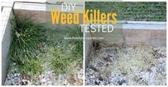Getting rid of pesky and persistent weeds is easier than you may think. Skip the chemical weed killers... your yard will thank you! [media_id:3491683] We all st…