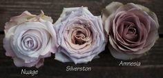 Antique Lavender Roses by Harvest Roses - http://www.harvestwholesale.com