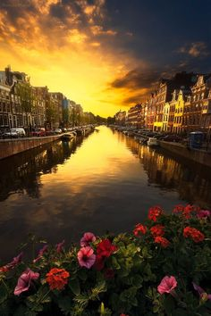 Amsterdam - Flowers and Golden Sky