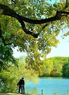 Le #Parc de la Tête d'Or: un pionnier de la gestion écologique à #Lyon Lyon, Nature, Golf Courses, Mountains, Green, Travel, Park, Management, Hobbies