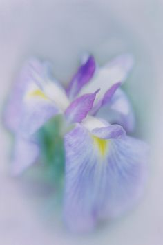 Lensbaby Iris by Jane Fernald on 500px