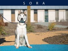 Sora (A666073)