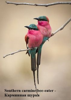 Most Beautiful Birds, Animals Beautiful, Cute Animals, Cute Birds, Pretty Birds, Birds 2, Flying Birds, Funny Birds, Glass Birds