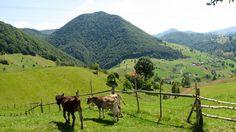 Dâmbovicioara, foothills of Piatra Craiului Mountains, Romania