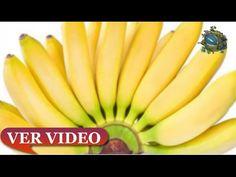 """Esta planta se llama """"regalo de dios"""", ya que puede curar más de 100 enfermedades! - YouTube"""