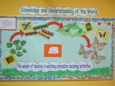 A super Life Cycle of a Butterfly classroom display photo contribution. Great ideas for your classroom! Classroom Display Boards, Classroom Displays, Bulletin Boards, Class Displays, School Displays, Science Fair Projects, Science Lessons, Life Science, Art Lessons