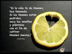 """""""Si la vida te da limones, haz limonada. Si los limones están podridos, saca las semillas y plántalas con el fin de cultivar limones nuevos."""" #LouiseHay #Citas #Frases @Candidman"""