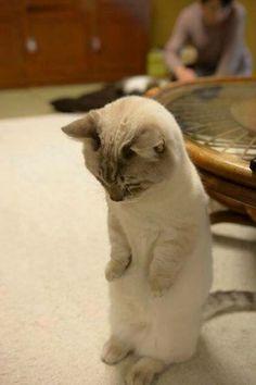 pardon je ne ferais plus pipi sur le tapis Sorry...