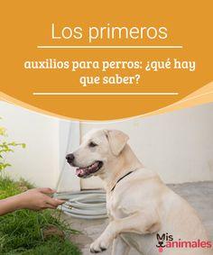 Los primeros auxilios para perros: ¿qué hay que saber?  ¿Te has preguntado qué puedes hacer si tu perro tiene una emergencia? Te hablamos sobre primeros auxilios para perros para que estés bien informado. #saber #auxilios #salud #emergencia